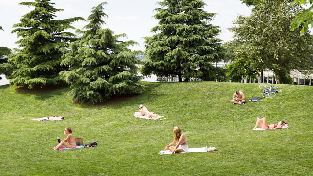 New Yorkers sunbathing on a grass field in the summer.